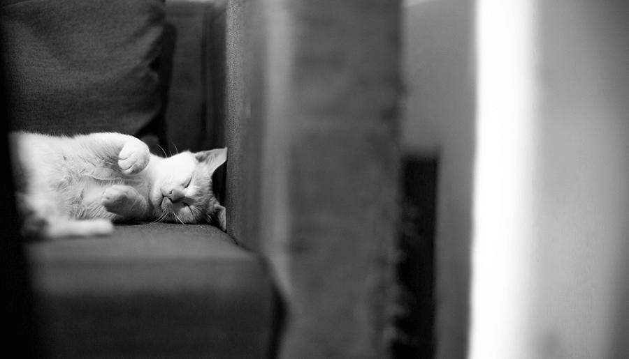 katzenhaare hundehaare tierhaare entfernen sofa test online